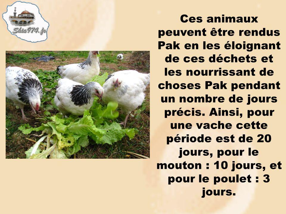 Ces animaux peuvent être rendus Pak en les éloignant de ces déchets et les nourrissant de choses Pak pendant un nombre de jours précis. Ainsi, pour un