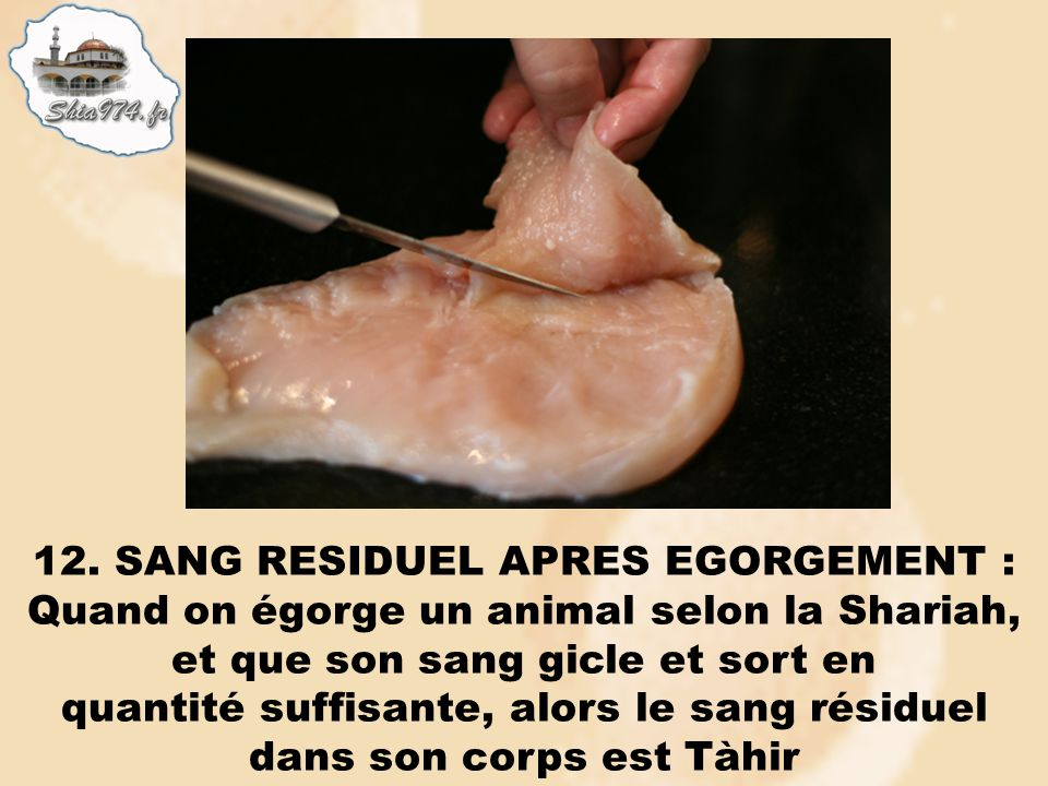 12. SANG RESIDUEL APRES EGORGEMENT : Quand on égorge un animal selon la Shariah, et que son sang gicle et sort en quantité suffisante, alors le sang r
