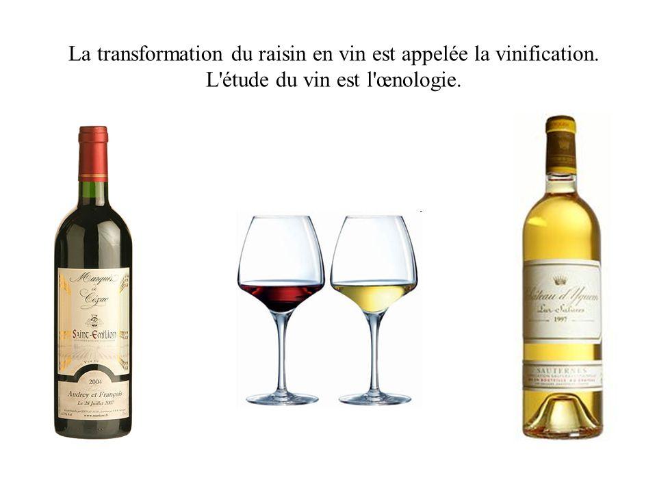 La transformation du raisin en vin est appelée la vinification. L'étude du vin est l'œnologie.