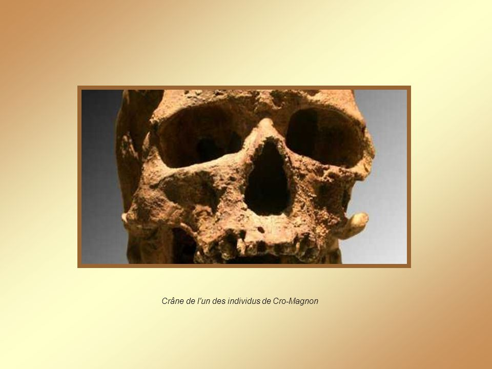 Labri de Cro-Magnon
