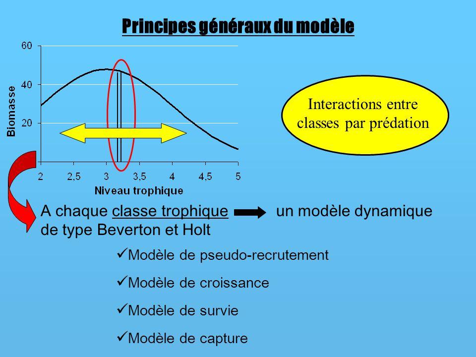 Modèle de pseudo-recrutement Le spectre suit une loi normale caractérisée par un niveau trophique moyen et un écart type du niveau trophique Spectre de biomasse Modèle de Beverton et Holt Cas 1Cas 2