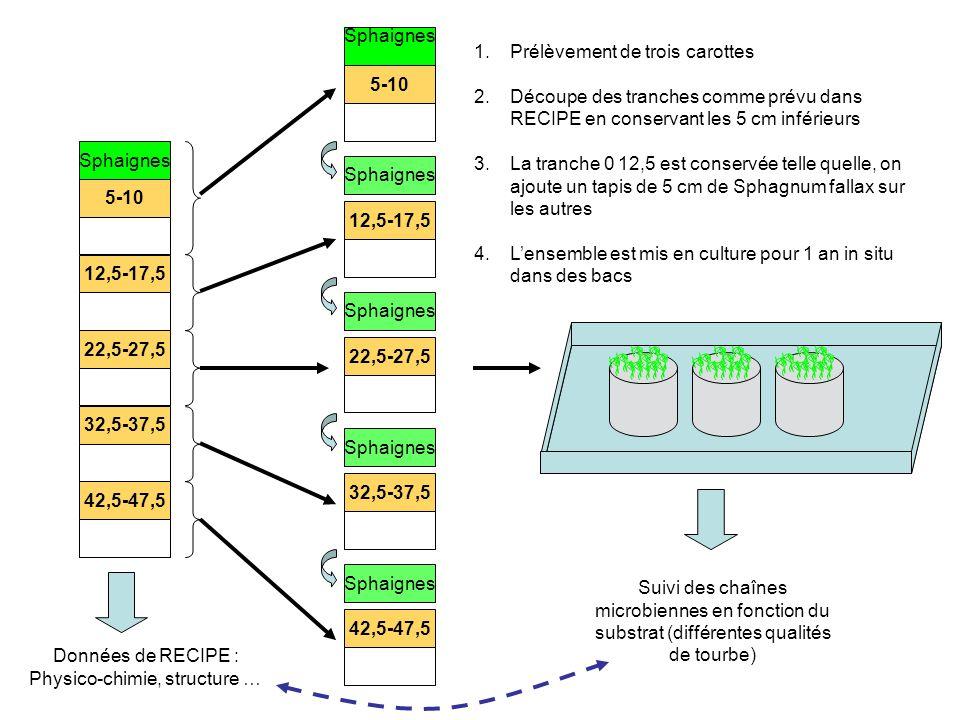 5-10 12,5-17,5 22,5-27,5 32,5-37,5 42,5-47,5 Sphaignes 5-10 12,5-17,5 22,5-27,5 32,5-37,5 42,5-47,5 Sphaignes Données de RECIPE : Physico-chimie, structure … 1.Prélèvement de trois carottes 2.Découpe des tranches comme prévu dans RECIPE en conservant les 5 cm inférieurs 3.La tranche 0 12,5 est conservée telle quelle, on ajoute un tapis de 5 cm de Sphagnum fallax sur les autres 4.Lensemble est mis en culture pour 1 an in situ dans des bacs Suivi des chaînes microbiennes en fonction du substrat (différentes qualités de tourbe)