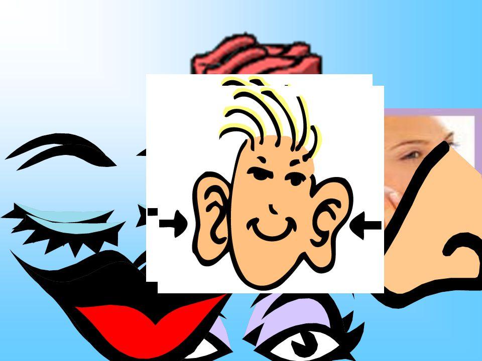 La tete Les yeux Le nez La bouche Les dents Les oreilles Draw and label