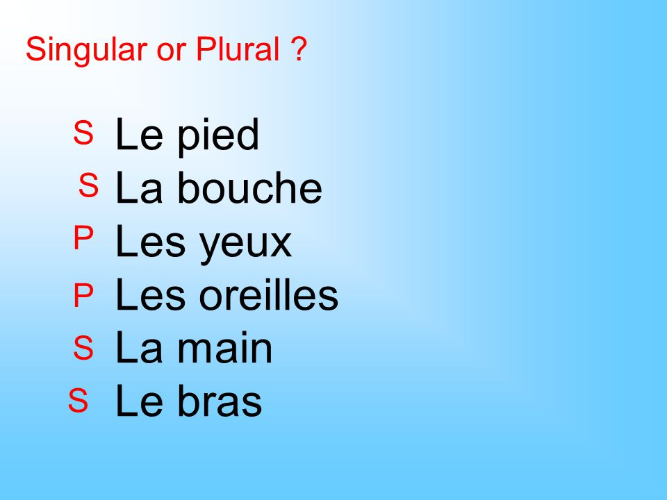Singular or Plural ? Le pied La bouche Les yeux Les oreilles La main Le bras S S P P S S
