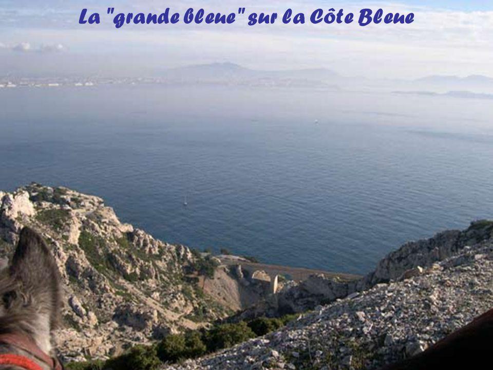 La Côte Bleue borde les Bouches du Rhône entre Martigues et Marseille. Elle recèle de magnifiques calanques et madragues et aussi des ports pittoresqu