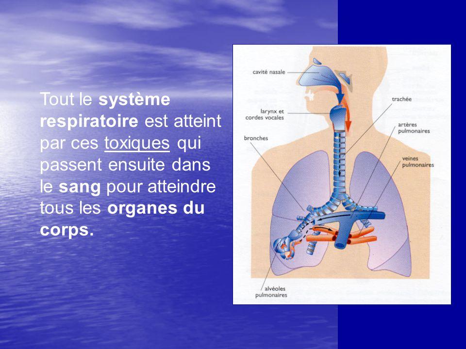 Tout le système respiratoire est atteint par ces toxiques qui passent ensuite dans le sang pour atteindre tous les organes du corps.