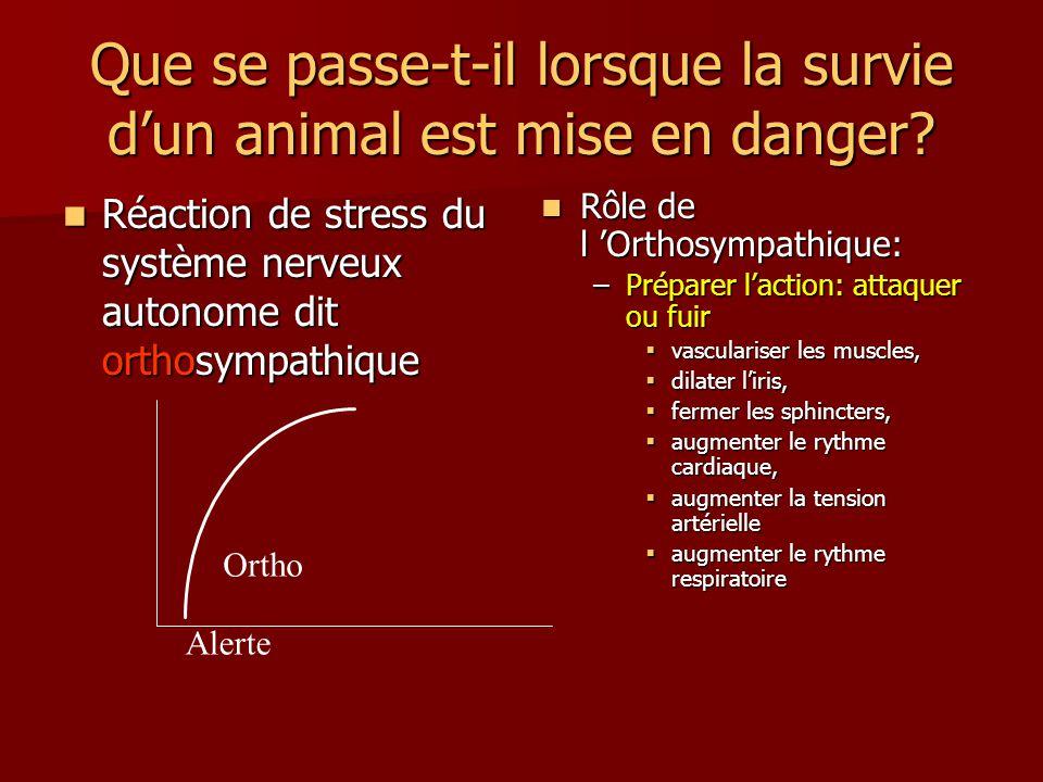 Que se passe-t-il lorsque la survie dun animal est mise en danger? Réaction de stress du système nerveux autonome dit orthosympathique Réaction de str