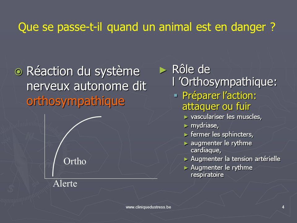 www.cliniquedustress.be4 Réaction du système nerveux autonome dit orthosympathique Réaction du système nerveux autonome dit orthosympathique Rôle de l