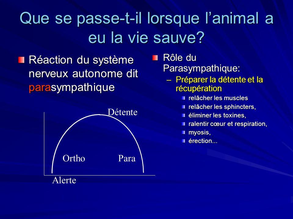 Que se passe-t-il lorsque lanimal a eu la vie sauve? Réaction du système nerveux autonome dit parasympathique Rôle du Parasympathique: –Préparer la dé