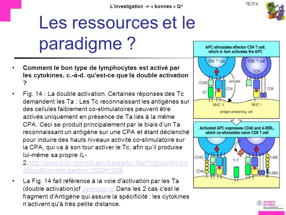 TECFA Linvestigation -> « bonnes » Q° Les ressources et le paradigme ? Comment le bon type de lymphocytes est activé par les cytokines, c.-à-d. qu'est