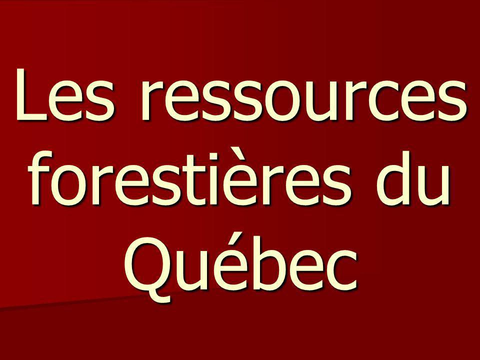 Introduction Les forêts du Québec sont très exploitées par les compagnies forestières qui en font des pâtes et papiers ou autres produits.