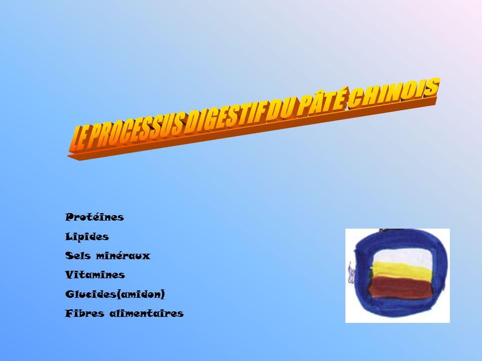 Protéines Lipides Sels minéraux Vitamines Glucides(amidon) Fibres alimentaires