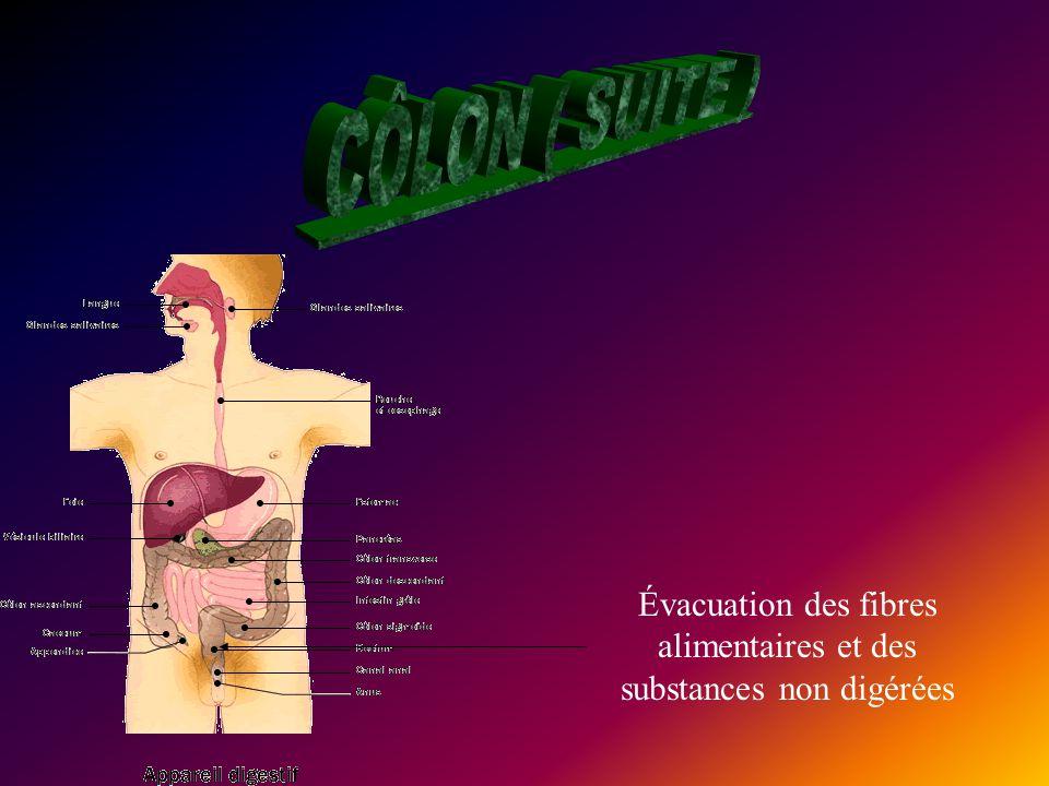 Nous espérons que vous en savez plus maintenant sur le processus digestif assez complexe de notre corps comme vous pouvez le voir sur cette image.