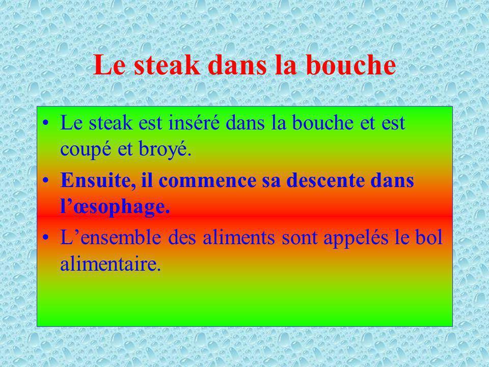 Le steak Le steak est constitué de protides, de lipides, de sels minéraux et de particules deau.