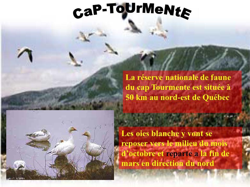Le Québec contient beaucoup de montagnes comme les Appalaches. Les Appalaches sont une chaîne de montagnes….