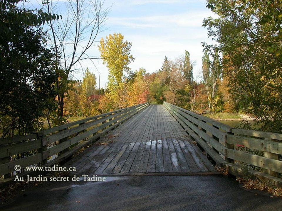 Le Québec regorge de cours deau telle que le fleuve St-Laurent et les chutes du mont-morency Il y a de très beau paysage au Québec comme ceux-ci. Il v