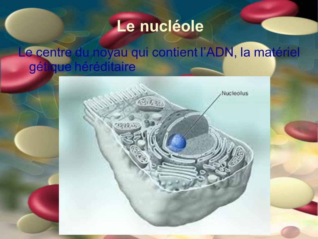 Le nucléole Le centre du noyau qui contient lADN, la matériel gétique héréditaire