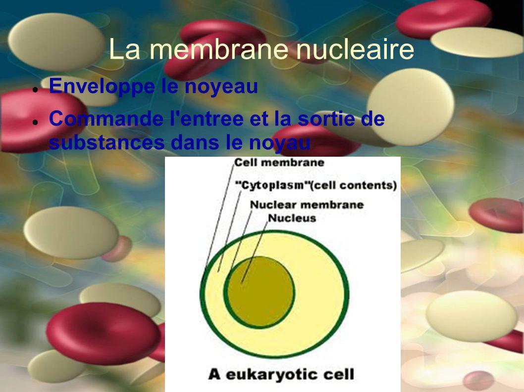 La membrane nucleaire Enveloppe le noyeau Commande l'entree et la sortie de substances dans le noyau