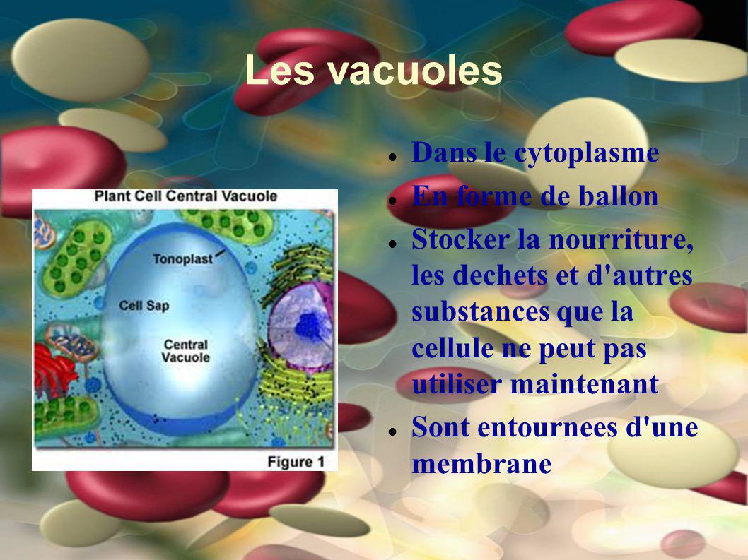 Les vacuoles Dans le cytoplasme En forme de ballon Stocker la nourriture, les dechets et d'autres substances que la cellule ne peut pas utiliser maint