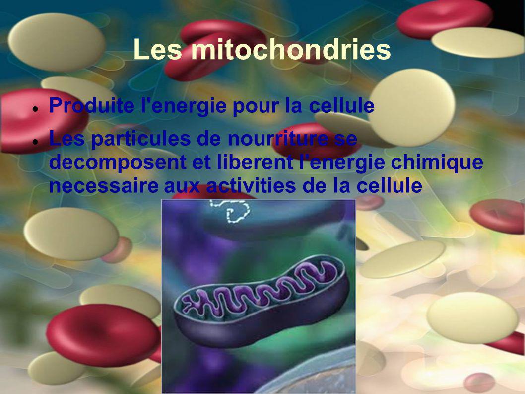 Les mitochondries Produite l'energie pour la cellule Les particules de nourriture se decomposent et liberent l'energie chimique necessaire aux activit