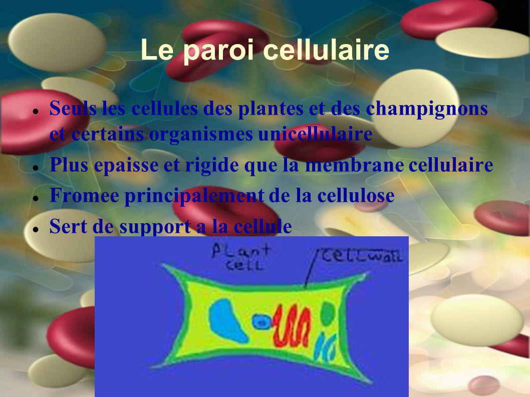 Le paroi cellulaire Seuls les cellules des plantes et des champignons et certains organismes unicellulaire Plus epaisse et rigide que la membrane cell