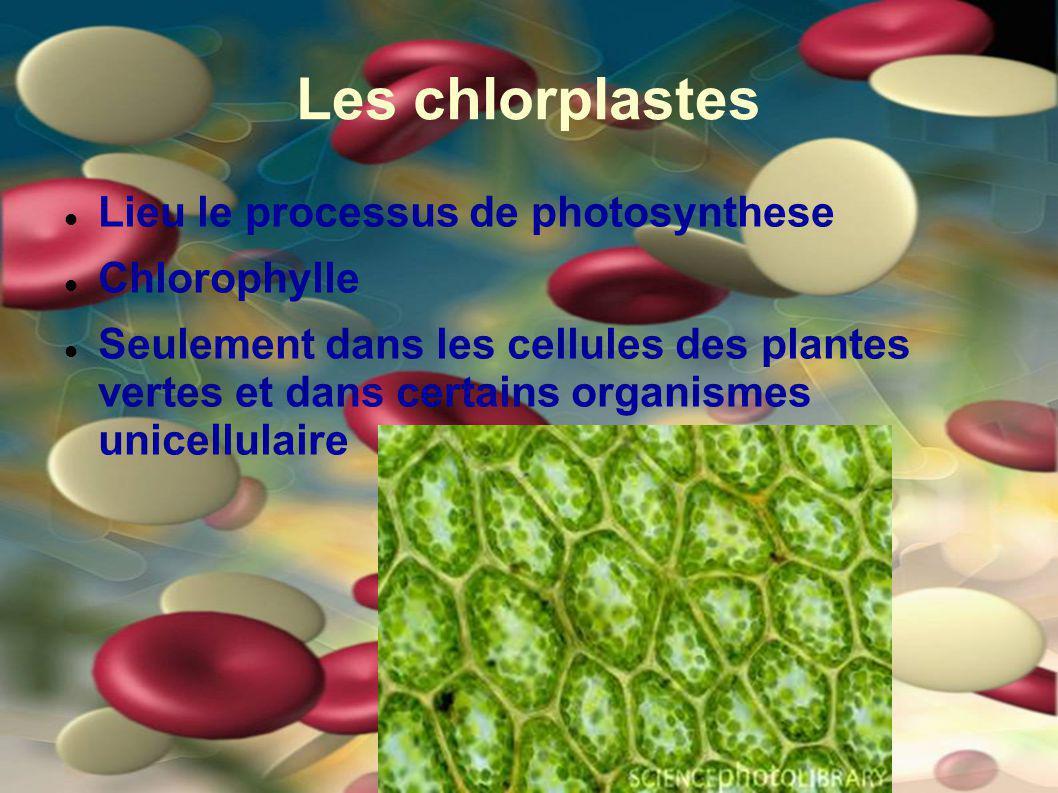 Les chlorplastes Lieu le processus de photosynthese Chlorophylle Seulement dans les cellules des plantes vertes et dans certains organismes unicellula