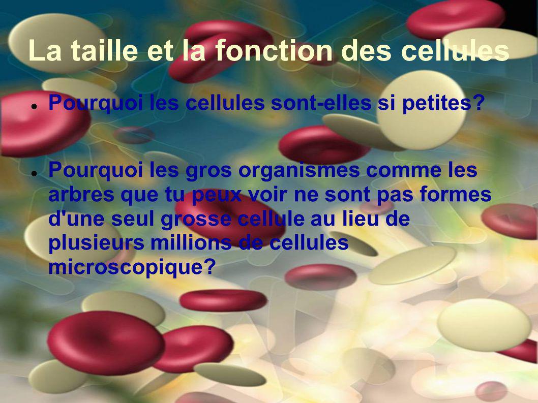 La taille et la fonction des cellules Pourquoi les cellules sont-elles si petites? Pourquoi les gros organismes comme les arbres que tu peux voir ne s