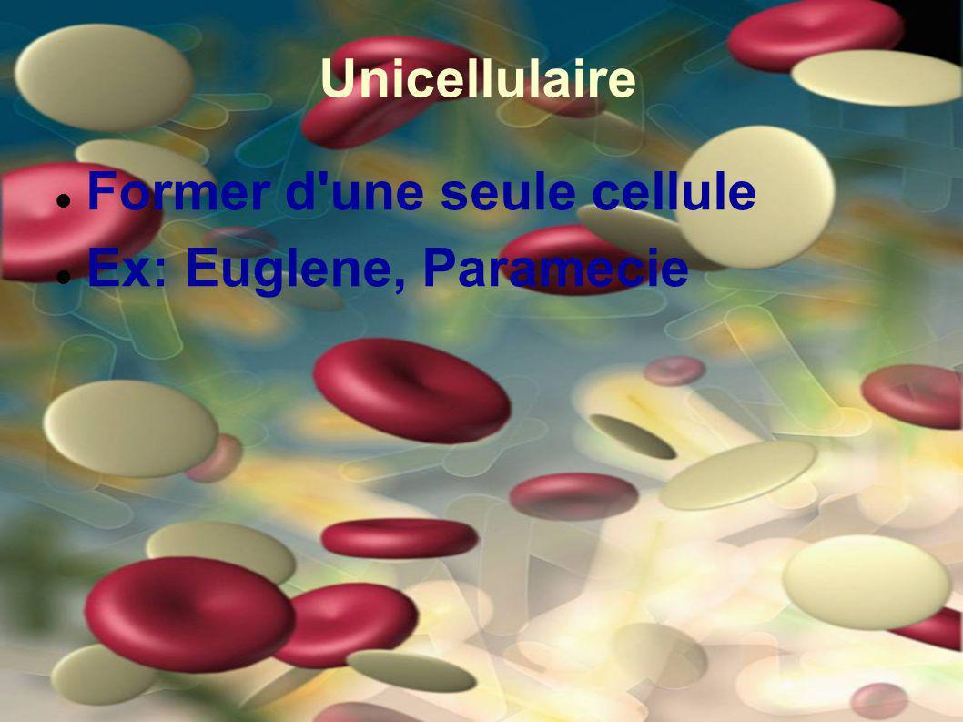 Unicellulaire Former d'une seule cellule Ex: Euglene, Paramecie