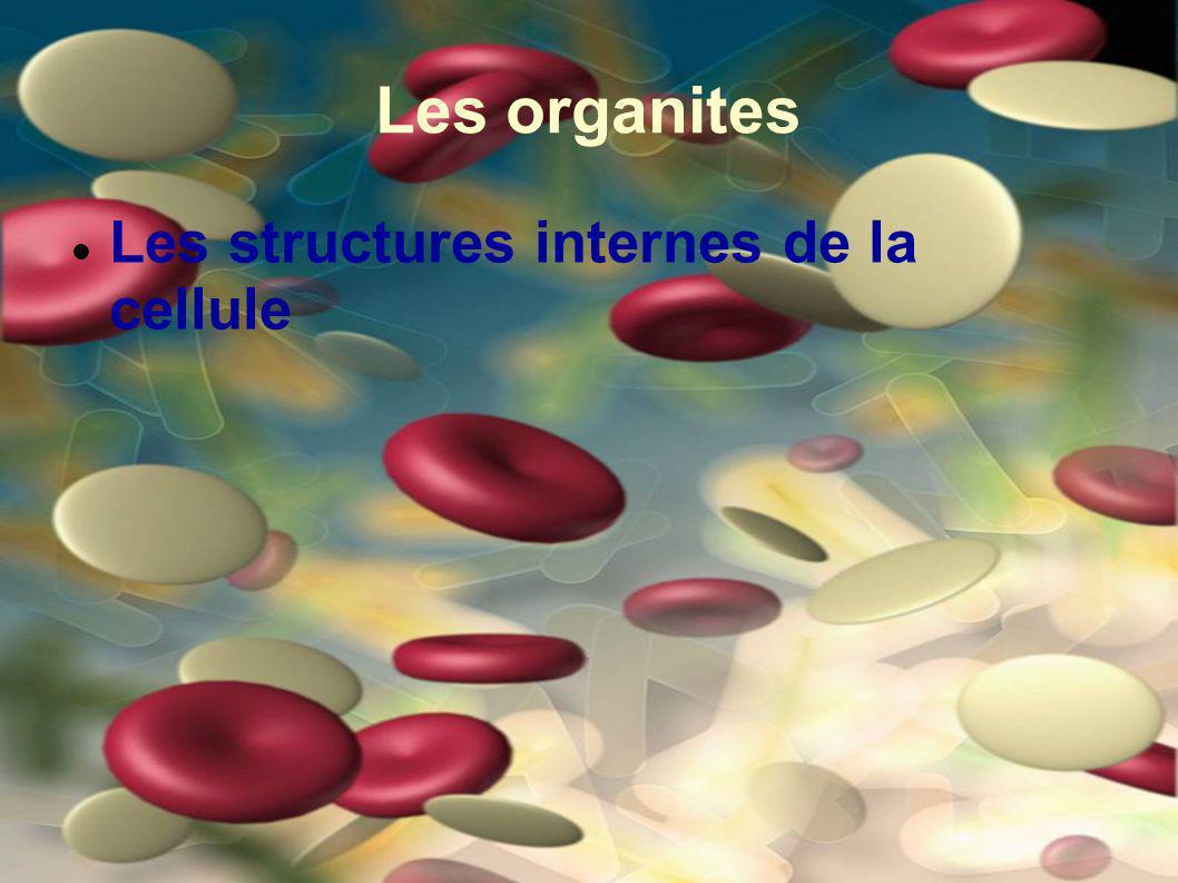 Les organites Les structures internes de la cellule