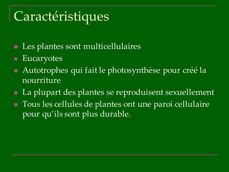 Caractéristiques Les plantes sont multicellulaires Eucaryotes Autotrophes qui fait le photosynthèse pour créé la nourriture La plupart des plantes se