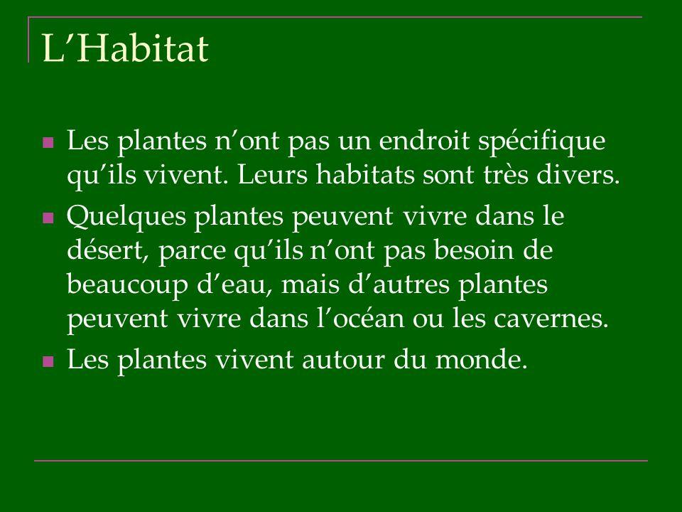 LHabitat Les plantes nont pas un endroit spécifique quils vivent. Leurs habitats sont très divers. Quelques plantes peuvent vivre dans le désert, parc