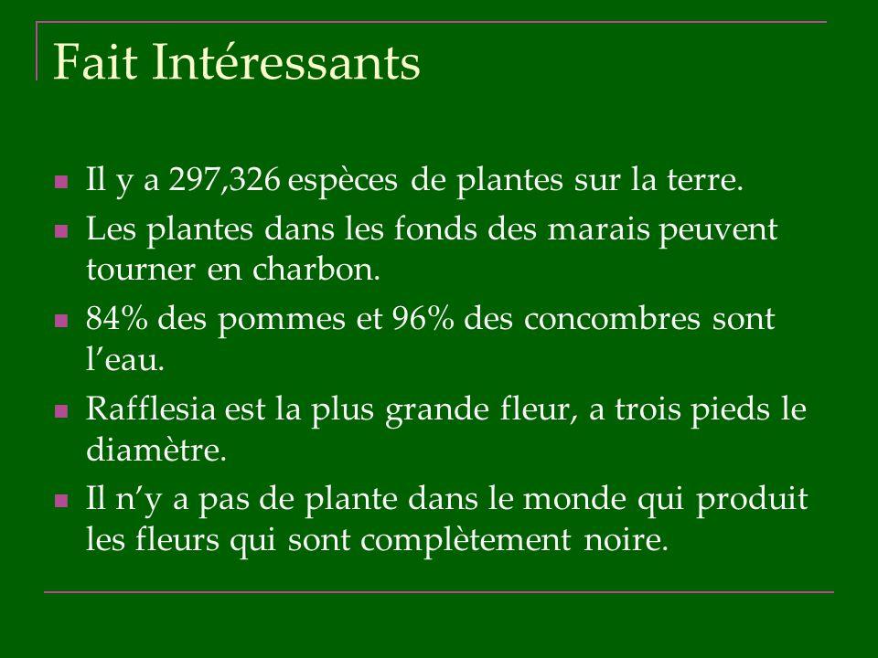 Fait Intéressants Il y a 297,326 espèces de plantes sur la terre. Les plantes dans les fonds des marais peuvent tourner en charbon. 84% des pommes et