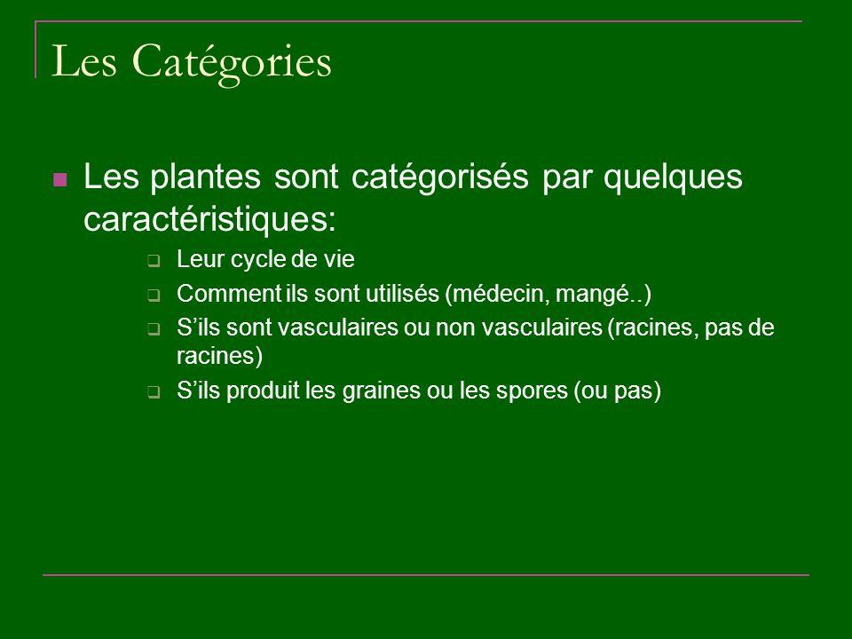 Les Catégories Les plantes sont catégorisés par quelques caractéristiques: Leur cycle de vie Comment ils sont utilisés (médecin, mangé..) Sils sont va