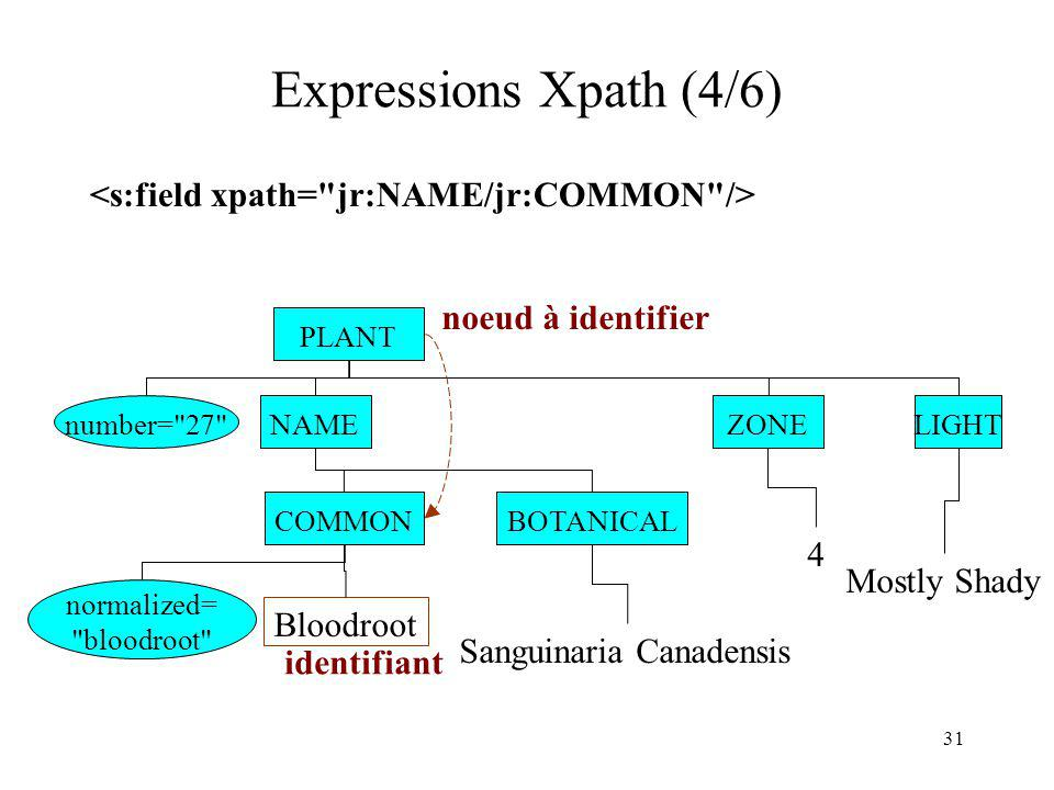 31 Expressions Xpath (4/6) PLANT NAME BOTANICALCOMMON Bloodroot Sanguinaria Canadensis ZONE...