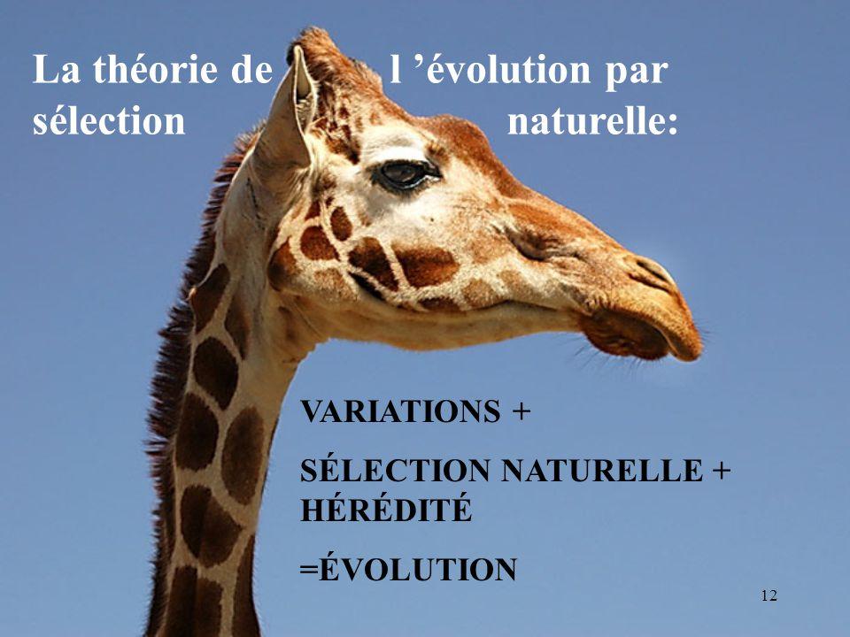 11 Des preuves de l évolution pour Darwin: La géologie terrestre Les découvertes de la paléontologie L embryologie comparée