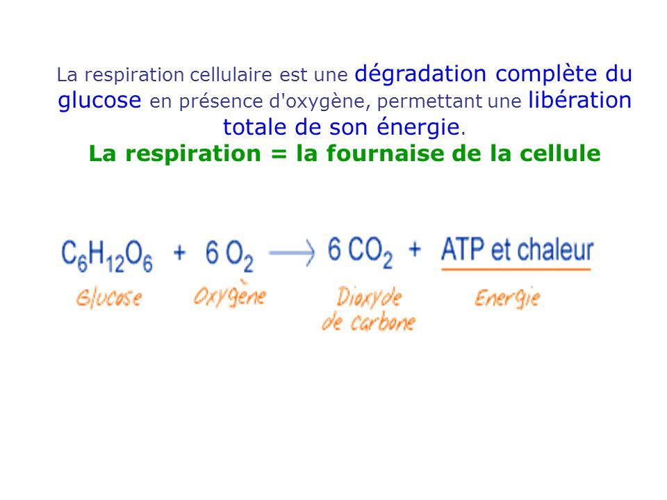 La respiration cellulaire est une dégradation complète du glucose en présence d'oxygène, permettant une libération totale de son énergie. La respirati