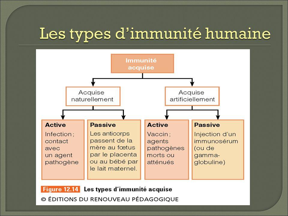 Les types dimmunité humaine