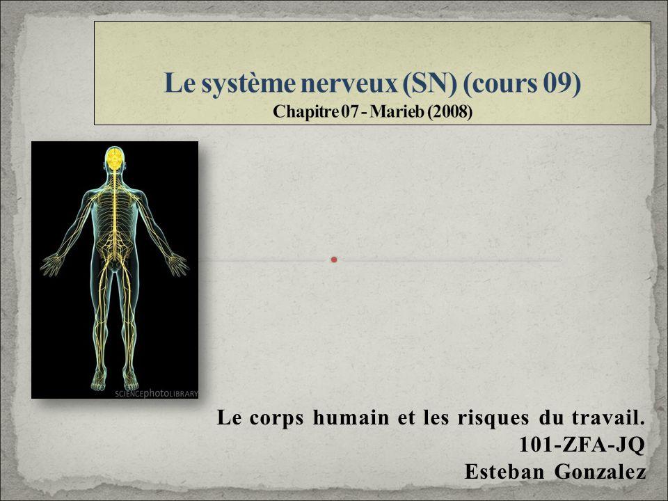 Le corps humain et les risques du travail. 101-ZFA-JQ Esteban Gonzalez