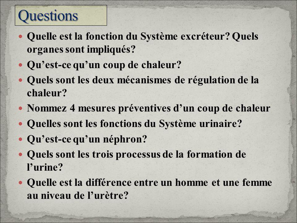 Quelle est la fonction du Système excréteur? Quels organes sont impliqués? Quest-ce quun coup de chaleur? Quels sont les deux mécanismes de régulation