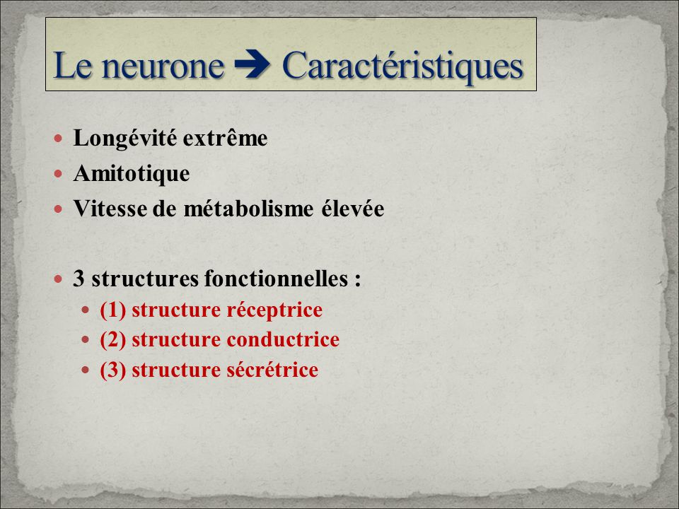 Longévité extrême Amitotique Vitesse de métabolisme élevée 3 structures fonctionnelles : (1) structure réceptrice (2) structure conductrice (3) struct