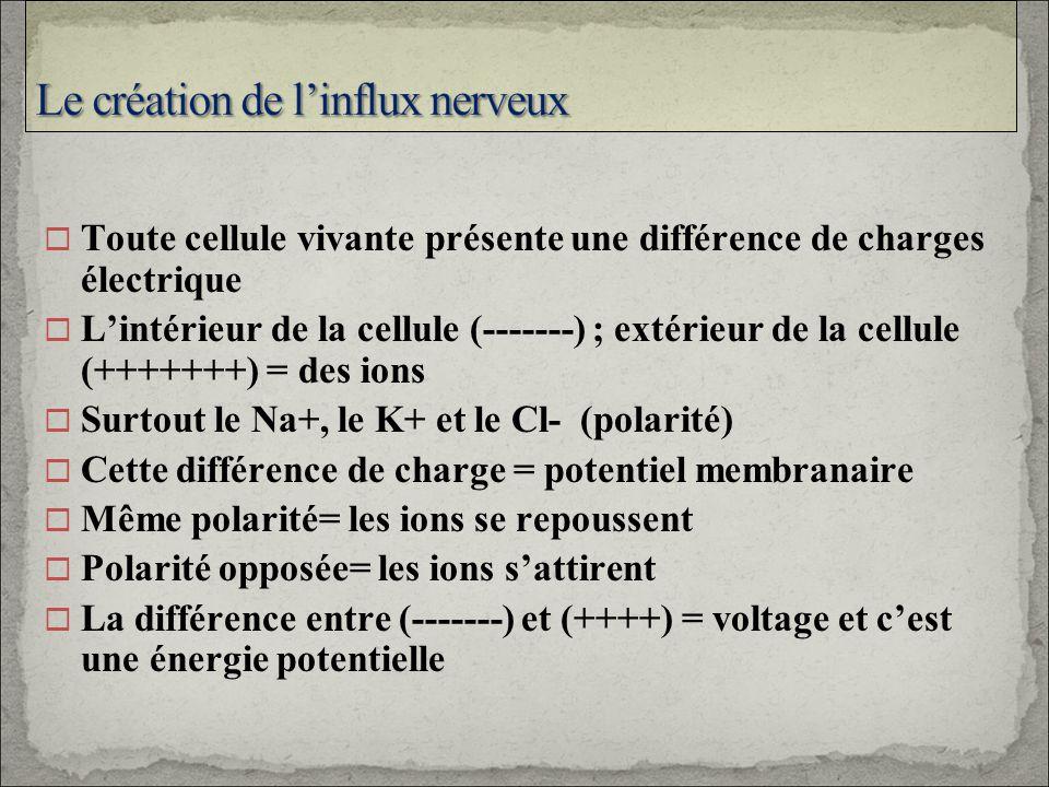 Toute cellule vivante présente une différence de charges électrique Lintérieur de la cellule (-------) ; extérieur de la cellule (+++++++) = des ions