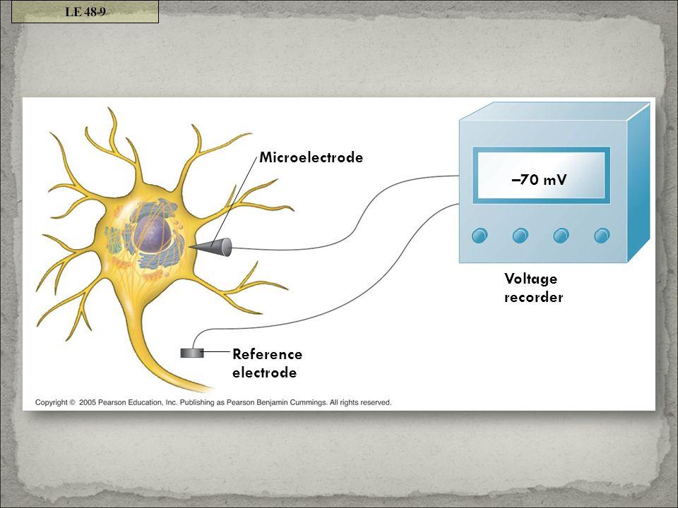 Microelectrode Reference electrode Voltage recorder –70 mV