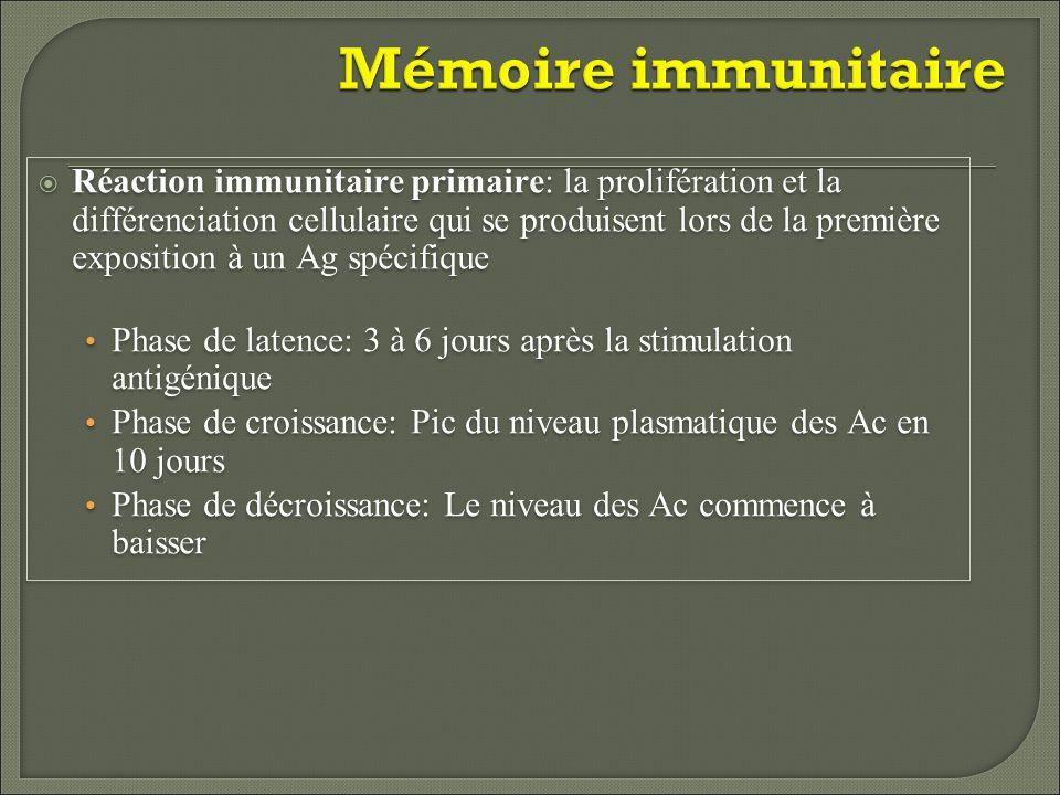 Mémoire immunitaire Réaction immunitaire secondaire: ré-exposition au même Ag Constitution de nouvelles cellules-mémoire en quelques heures Le pic du niveau des Ac est atteint en 2 à 3 jours et est supérieur à celui de la réponse primaire Les Ac se lient avec une plus grande affinité Réaction immunitaire secondaire: ré-exposition au même Ag Constitution de nouvelles cellules-mémoire en quelques heures Le pic du niveau des Ac est atteint en 2 à 3 jours et est supérieur à celui de la réponse primaire Les Ac se lient avec une plus grande affinité