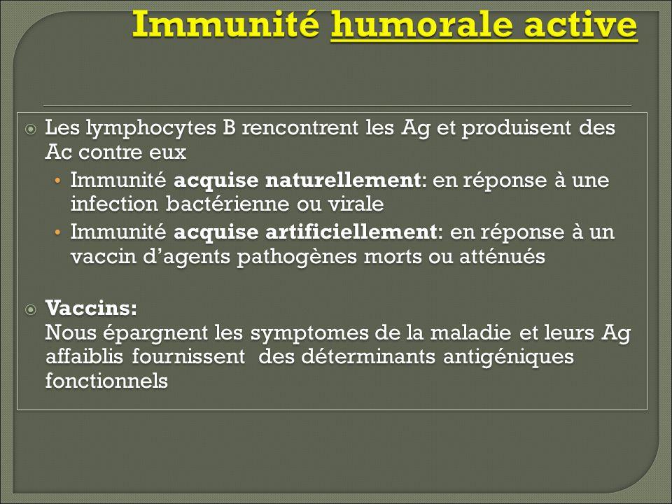 Immunité humorale active Les lymphocytes B rencontrent les Ag et produisent des Ac contre eux Immunité acquise naturellement: en réponse à une infecti