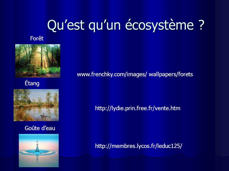 Quest quun écosystème ? http://membres.lycos.fr/leduc125/ http://lydie.prin.free.fr/vente.htm www.frenchky.com/images/ wallpapers/forets Étang Forêt G