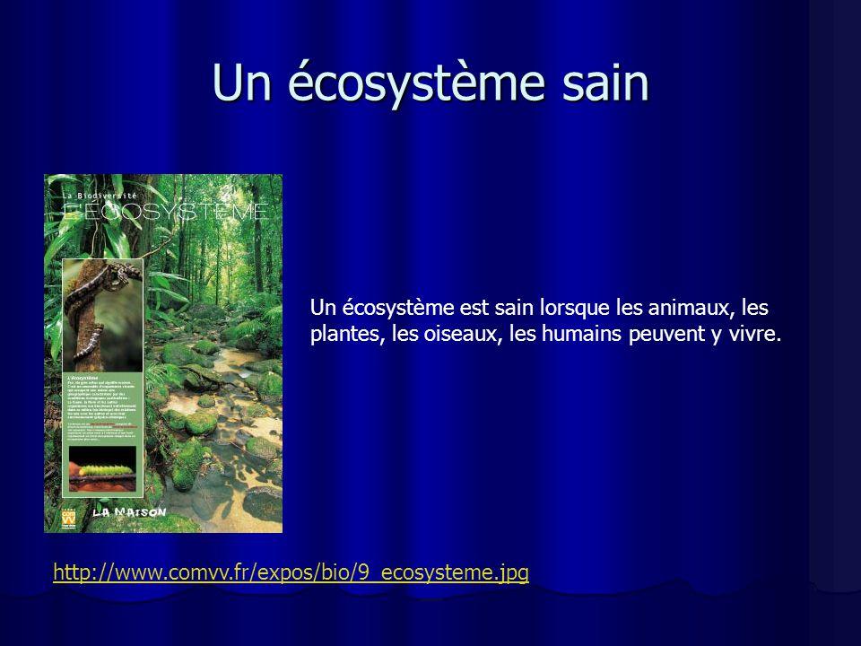Un écosystème sain Un écosystème est sain lorsque les animaux, les plantes, les oiseaux, les humains peuvent y vivre. http://www.comvv.fr/expos/bio/9_