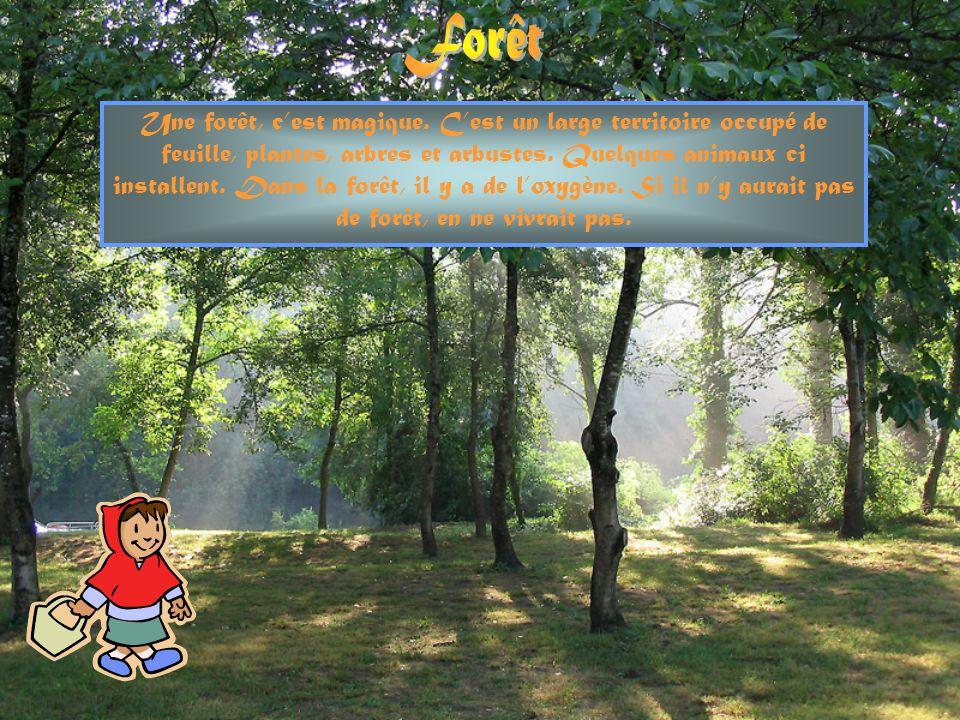Une forêt, cest magique.Cest un large territoire occupé de feuille, plantes, arbres et arbustes.