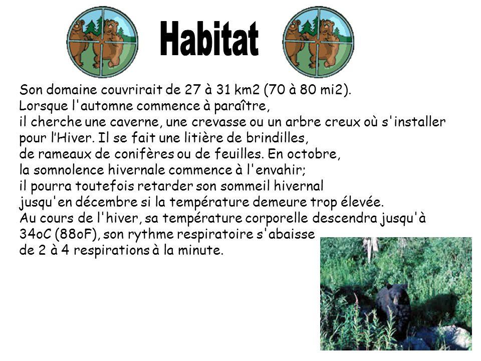 Son domaine couvrirait de 27 à 31 km2 (70 à 80 mi2). Lorsque l'automne commence à paraître, il cherche une caverne, une crevasse ou un arbre creux où