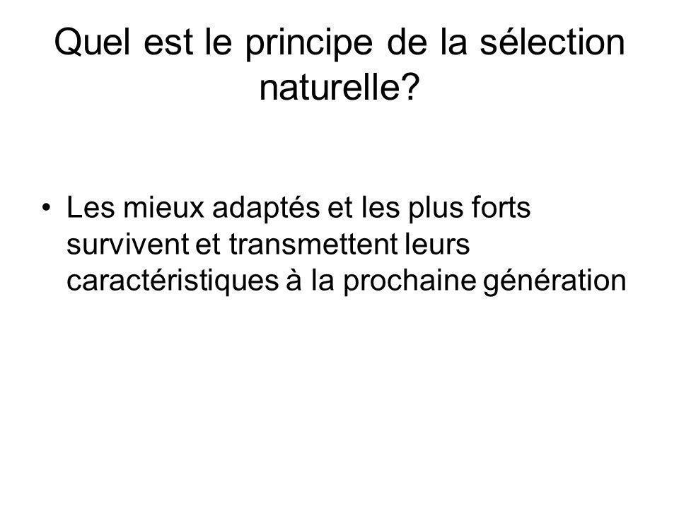 Quel est le principe de la sélection naturelle? Les mieux adaptés et les plus forts survivent et transmettent leurs caractéristiques à la prochaine gé