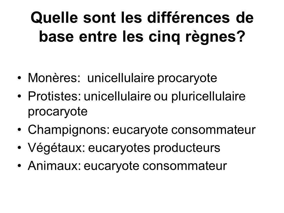Quelle sont les différences de base entre les cinq règnes? Monères: unicellulaire procaryote Protistes: unicellulaire ou pluricellulaire procaryote Ch